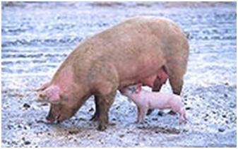 babi-lu
